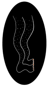 illustration-jambes-poilues-damoiseaux